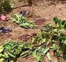 Explosion de grenade à Labé : un militaire à la retraite inculpé